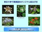 千葉演習林オリジナルポストカード 演習林の植物1