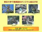 千葉演習林オリジナルポストカード 演習林の鳥類1