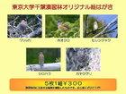 千葉演習林オリジナルポストカード 演習林の鳥類2