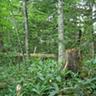 森林圏生態学研究室